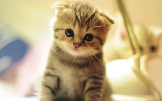 Apa Itu Ailurophobia (Ketakutan Pada Kucing) ?