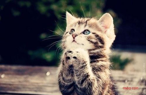 mèo dễ thương nhất