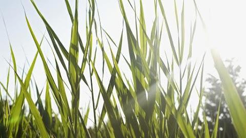 Végre egy jó hír a nehézségek között: hétvégén visszatér a tavasz