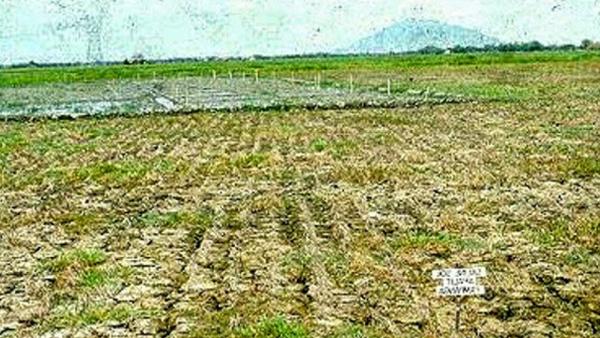 tanah salin, tanaman yang toleran terhadap tanah salin, tanah salin pdf, pengelolaan tanah salin, cara mengatasi tanah salin, pengelolaan tanah salin pdf