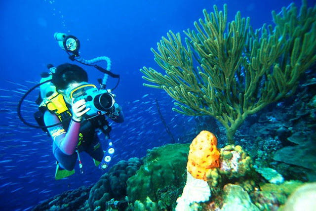 Diving Indonesia Tour Experience It From Different Dimensions