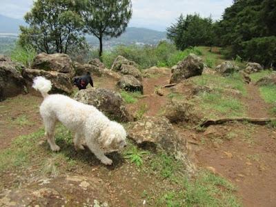 Perros paseando en el Estribo Grande en Pátzcuaro, Michoacán