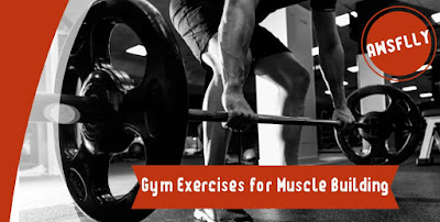 Gym Exercises for Muscle Building