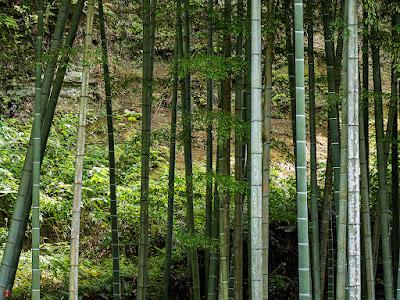 Bamboo: Jochi-ji