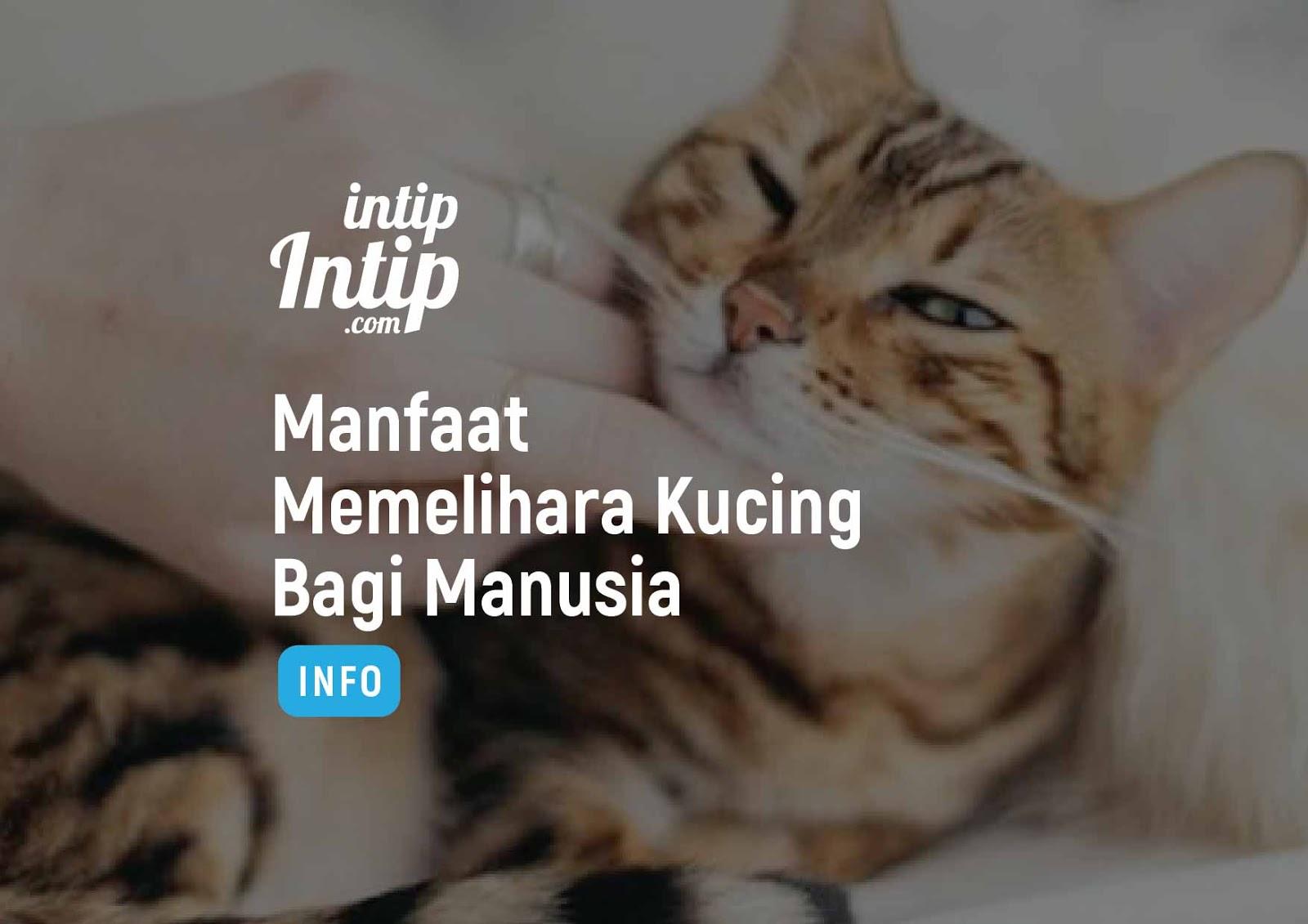 Manfaat Memelihara Kucing Bagi Manusia