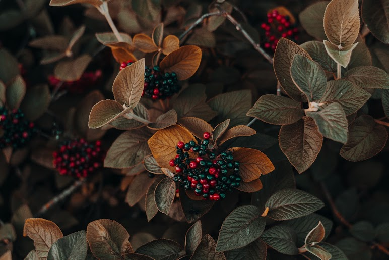 4k Wallpaper Autumn Beautiful Brown and Green Leafed Plants