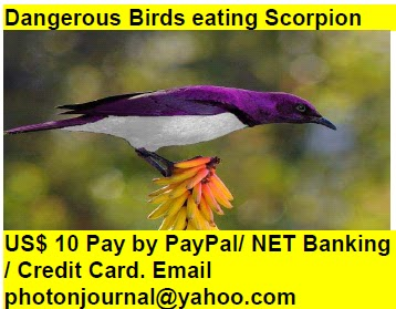 Dangerous Birds eating Scorpion bird story book