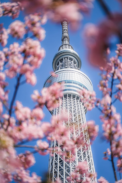 桜,青空,スカイツリー