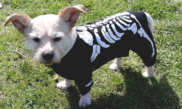 This Skeleton Bones Dog Costume Also Glows In The Dark For Extra Spookiness Dress Your Up Halloween Just Fun Or Any Other Special Occasion