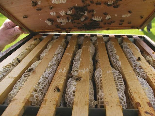 Μπλοκάρισμα με μέλια στη κυψέλη: Πως συμβαίνει και σε τι χρησιμεύει το βασιλικό διάφραγμα;