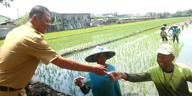 Kepala Desa Jati Wetan Jagong Bareng Petani