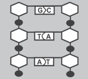 Dna pengertian struktur fungsi dan replikasinya ilmu sains struktur dna ccuart Images