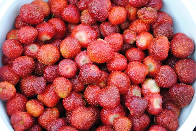 Koduaia maasikad