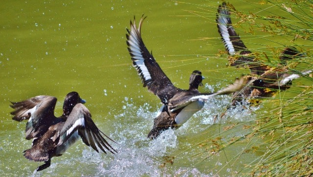 essential duck hunting gear beginners hunters guns ammo camo clothing ducks