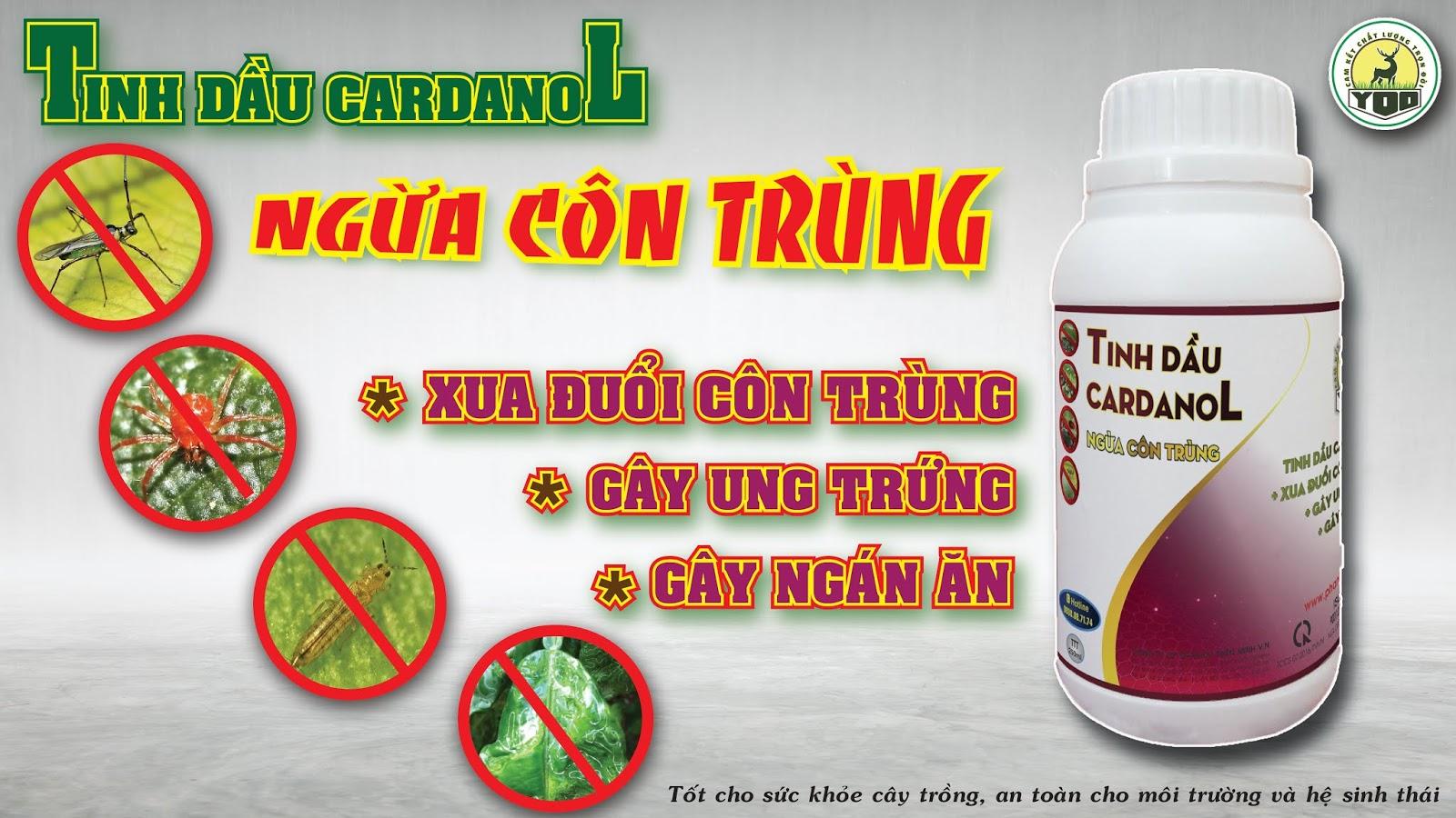 TINH DẦU CARDANOL NGỪA CÔN TRÙNG