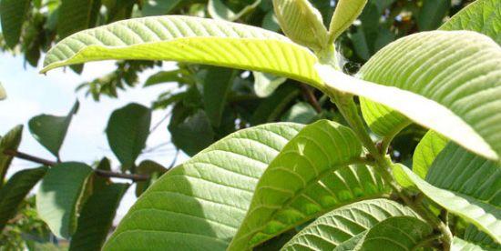 4 Obat Untuk Mengatasi Keputihan Yang Alami dan Aman Tanpa Efek Samping