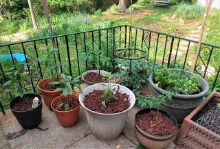 Yard and Garden Secrets
