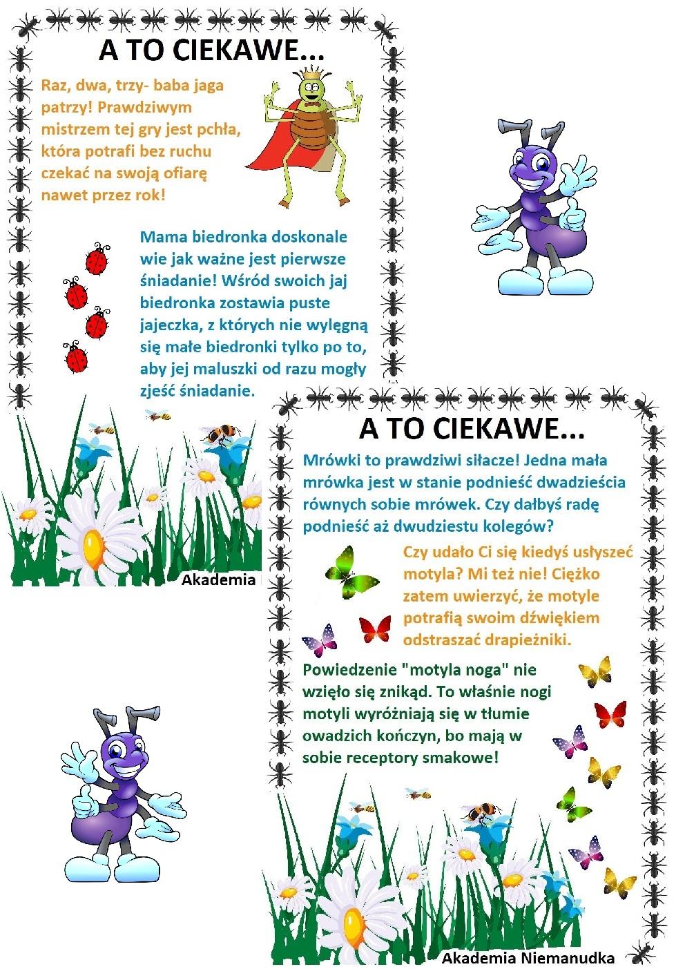 robaki, co wiesz o, czy wiesz że, ciekawe fakty o owadach