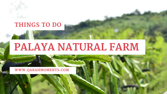Things to do in Palaya Natural Farm