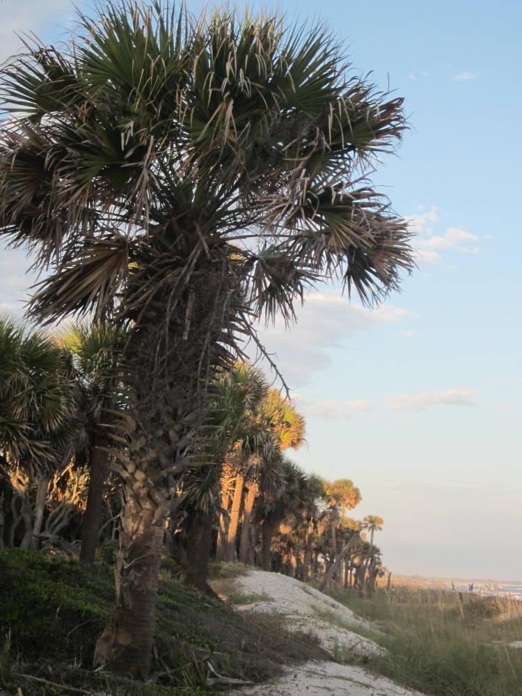 Tumbleweeds Edisto Beach South Carolina
