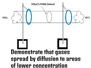 Demonstrate that gases spread by diffusion to areas of lower concentration