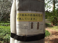 That wrapping is a pest protection - Kyoto Gyoen National Garden, Japan