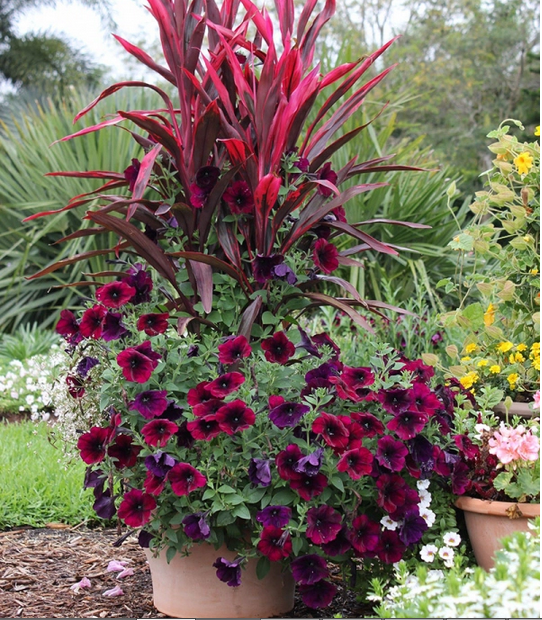 Spectacular Container Garden Arrangements  Subtropical