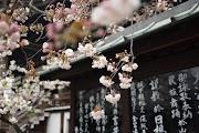 Panduan & Tips Mudah Mendapatkan Visa Jepang Tanpa E-Paspor