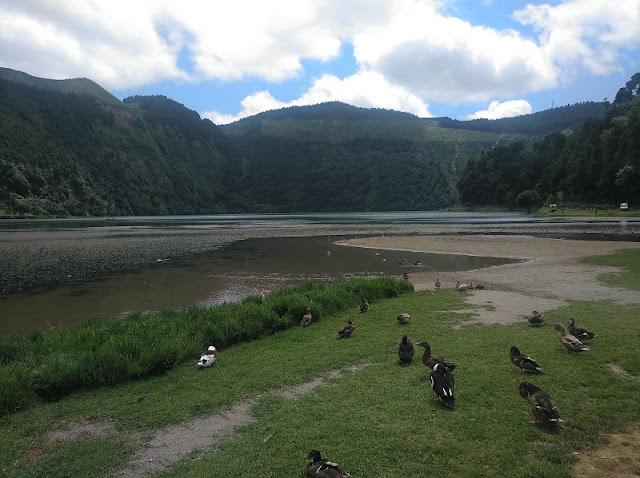 Patos en Lagoa Verde en Sete Cidades (Azores)