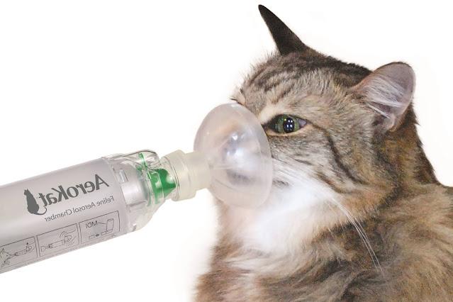Feline Asthma in Cats