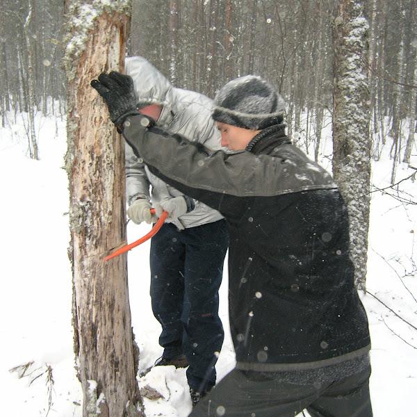 Пилим дрова