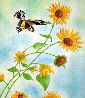 European Goldfinch_Susan Perez