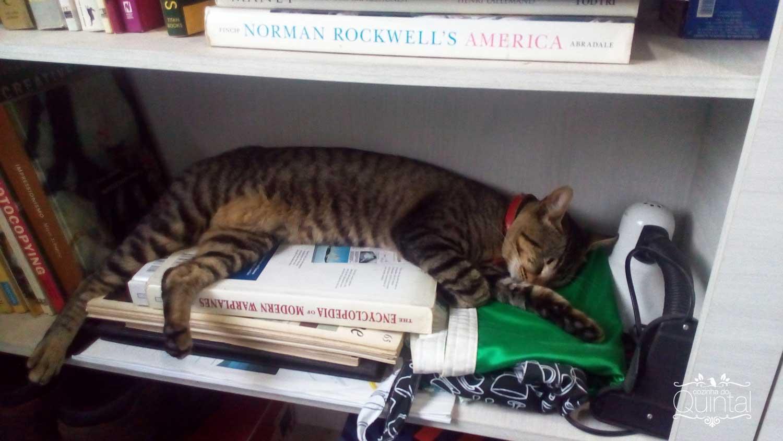 Kira na minha estante =)