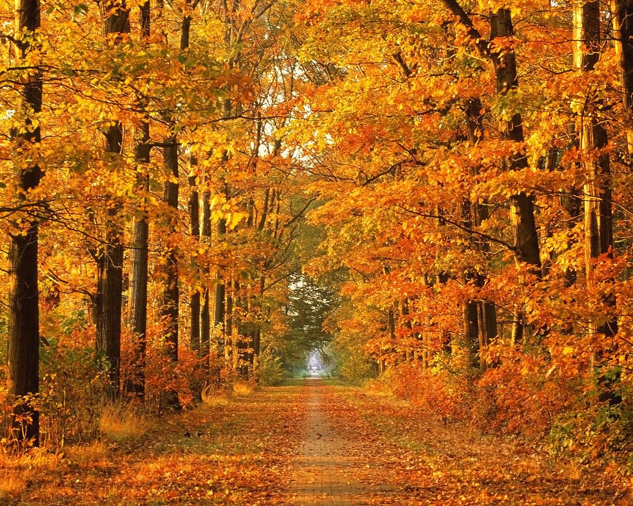 Autumn Season Wallpaperswallpapers Screensavers