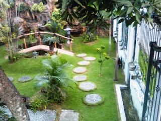 Pohon untuk halaman rumah minimalis