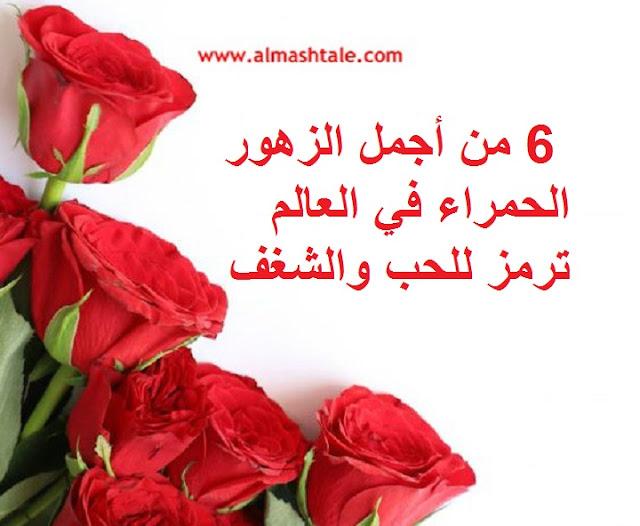 6 من أجمل الزهور الحمراء في العالم ترمز للحب والشغف