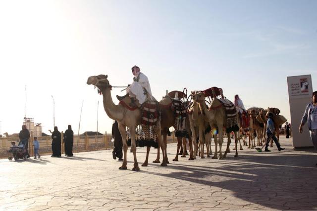 متابعة الأولمبياد الوطني للإبل في مهرجان الملك عبد العزيز  بمشاركة 23,646 طالب وطالبة