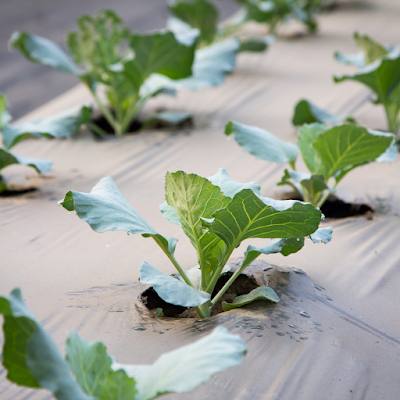 protecting seedlings from pests