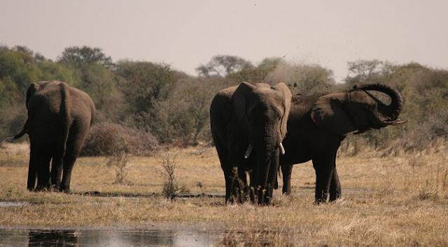 Salar makgadikgadi Botsuana