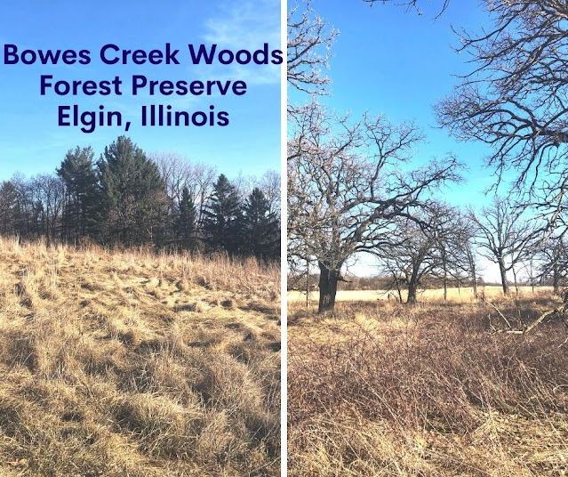 Bowes Creek Woods Forest Preserve in Elgin, Illinois Delights with Gently Rambling Bowes Creek