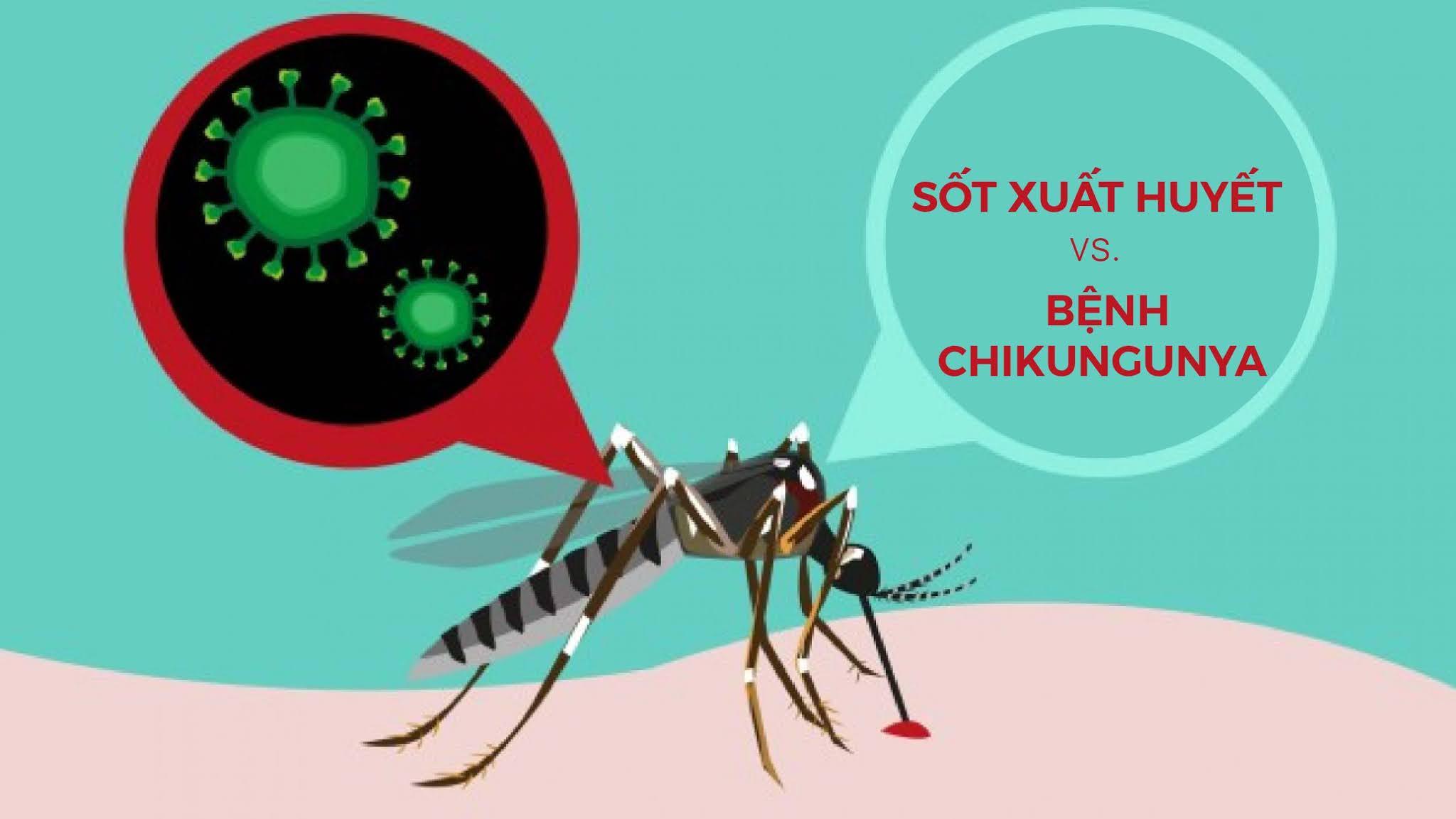 Sốt xuất huyết và bệnh Chikungunya: Sự khác biệt là gì?