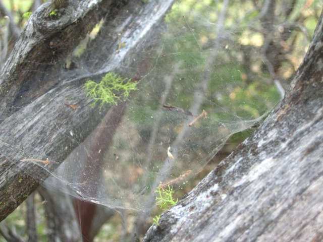 backyard nature fun spider web hunt. Black Bedroom Furniture Sets. Home Design Ideas