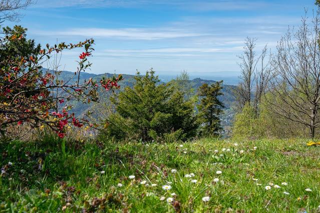 Premiumwanderweg Murgleiter | Etappe 1 von Gaggenau nach Gernsbach | Wandern nördlicher Schwarzwald 24