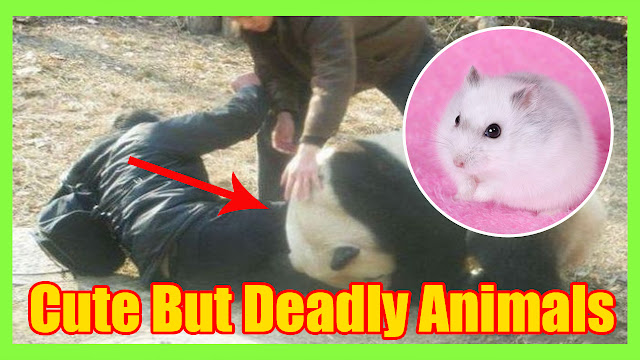 8 cute but deadly animals