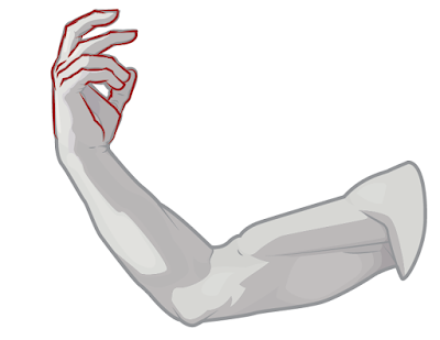 Draw the structures of the hand.
