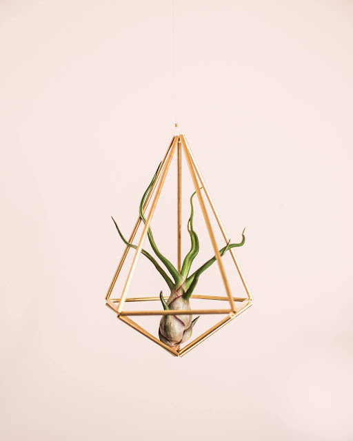 Prism air plant holder by Hemleva