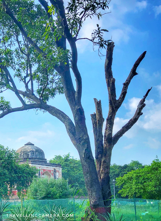In the early 20th century, specimen of foreign trees were brought here to assess their feasibility in the climate, and the ones that managed to survive were planted in the Imperial city. You can still see some unique varieties here in this garden today.