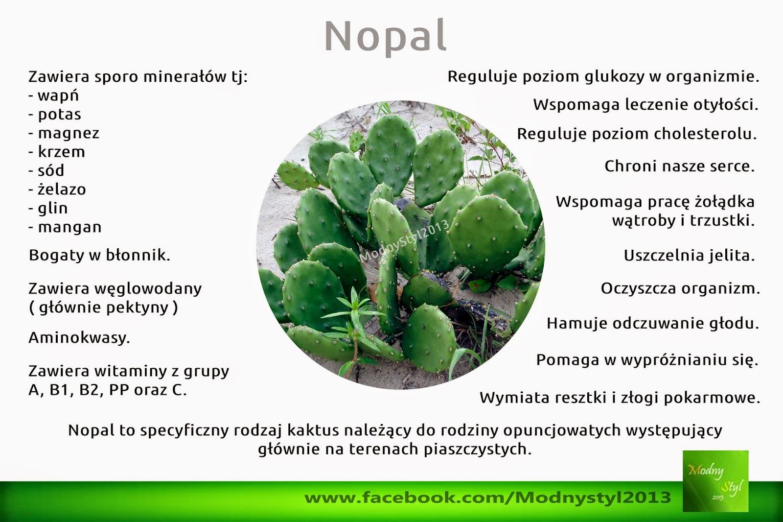 Nopal czyli opuncja figowa
