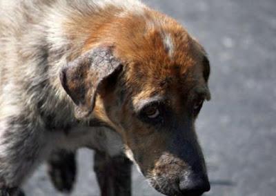 На Луганщині судитимуть чоловіка, який викинув собаку з вікна