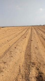 دراسة جدوى لأستصلاح الاراضى الصحراوية 2021 | خطوات استصلاح الأراضي الصحراوية | زراعة الأراضي الصحراوية 2021